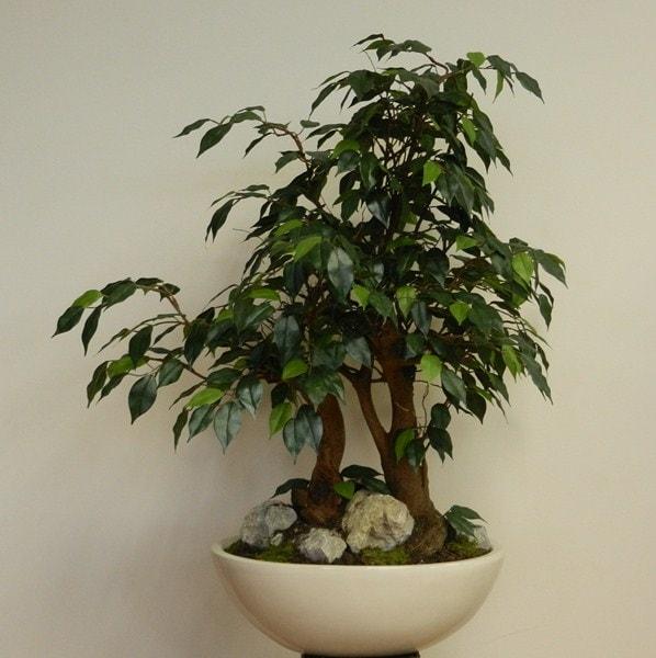 umetni bonsai 82 cm