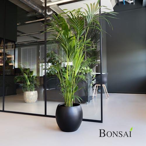 Cvetlični lonec Kreta 37x32 bonsai