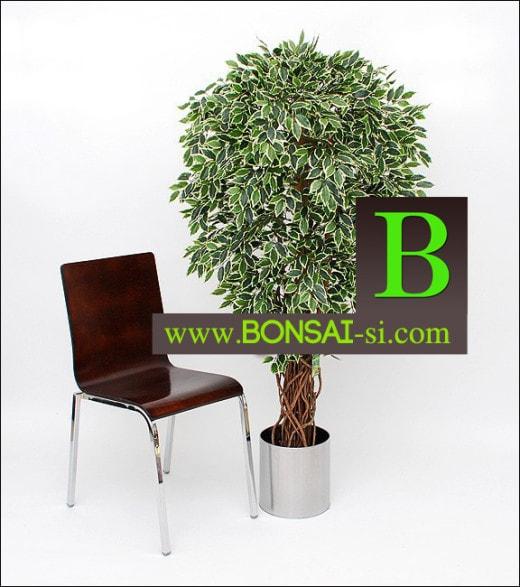 Fikus umetna drevesa umetno drevje Bonsai