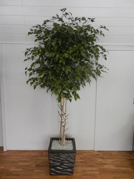 Umetna Breza 240cm
