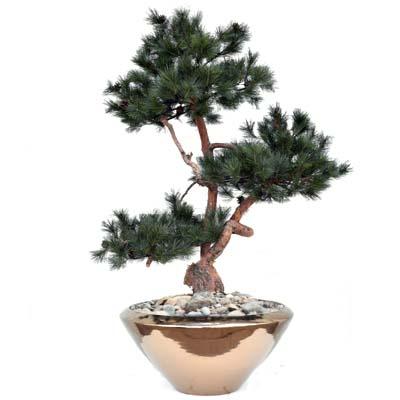 Umetni bonsai Borovec-x3-150-cm