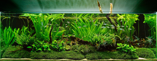 akvarij umetne rastline