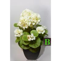 Bele Geranije balkonsko cvetje