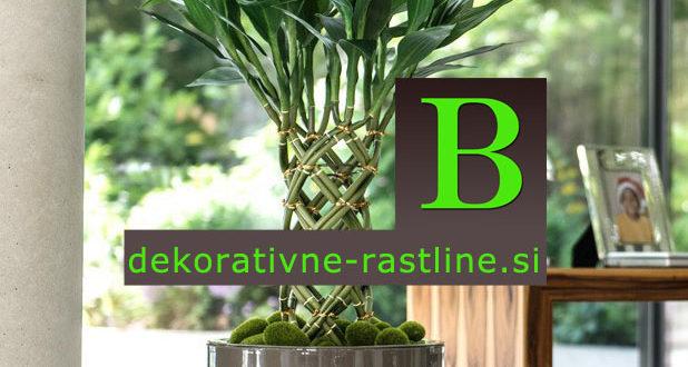 umetni bambus sreče