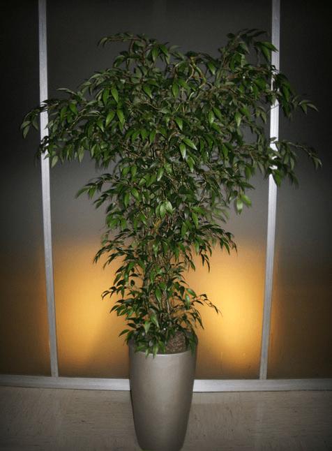Umetno drevo Benjamin