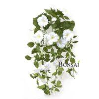 balkonsko cvetje - bele petunije