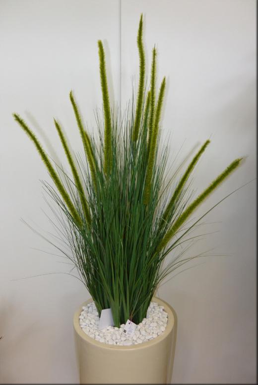 dekorativna trava Perjanka