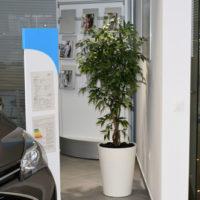 Umetna drevesa - umetno drevo v prostoru