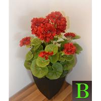 balkonsko cvetje za na okenske police