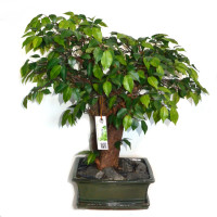 umetni bonsai Ficus fikus benjamin vestacki umjetni bonsai