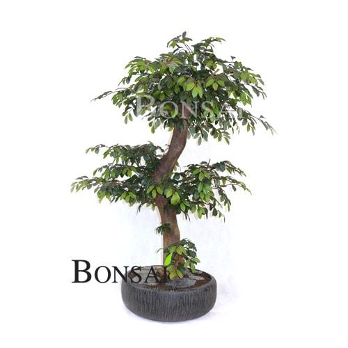 umetni bonsai Fikus Ficus umjetni veštački bonsai handmade