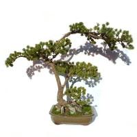 umetni bonsai pinija Prunus Pine umjetni veštački bonsai