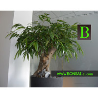 umetni bonsai tropski - umjetni bonsai