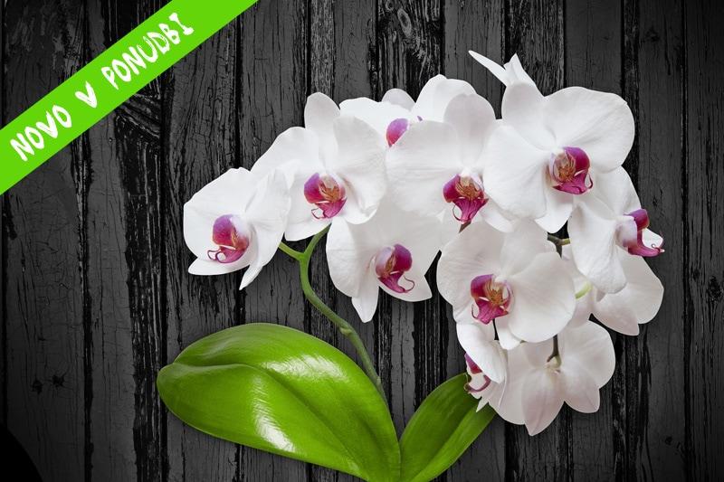 umetno cvetje umetne orhideje