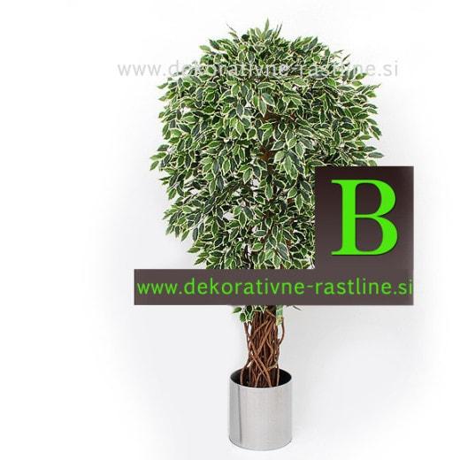 umetno drevo Fikus Ficus benjamin umetna drevesa Bonsai