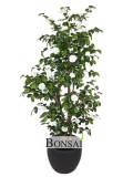 Kunstbaum Dekobaum Kunstpflanzen Slowenien Europe