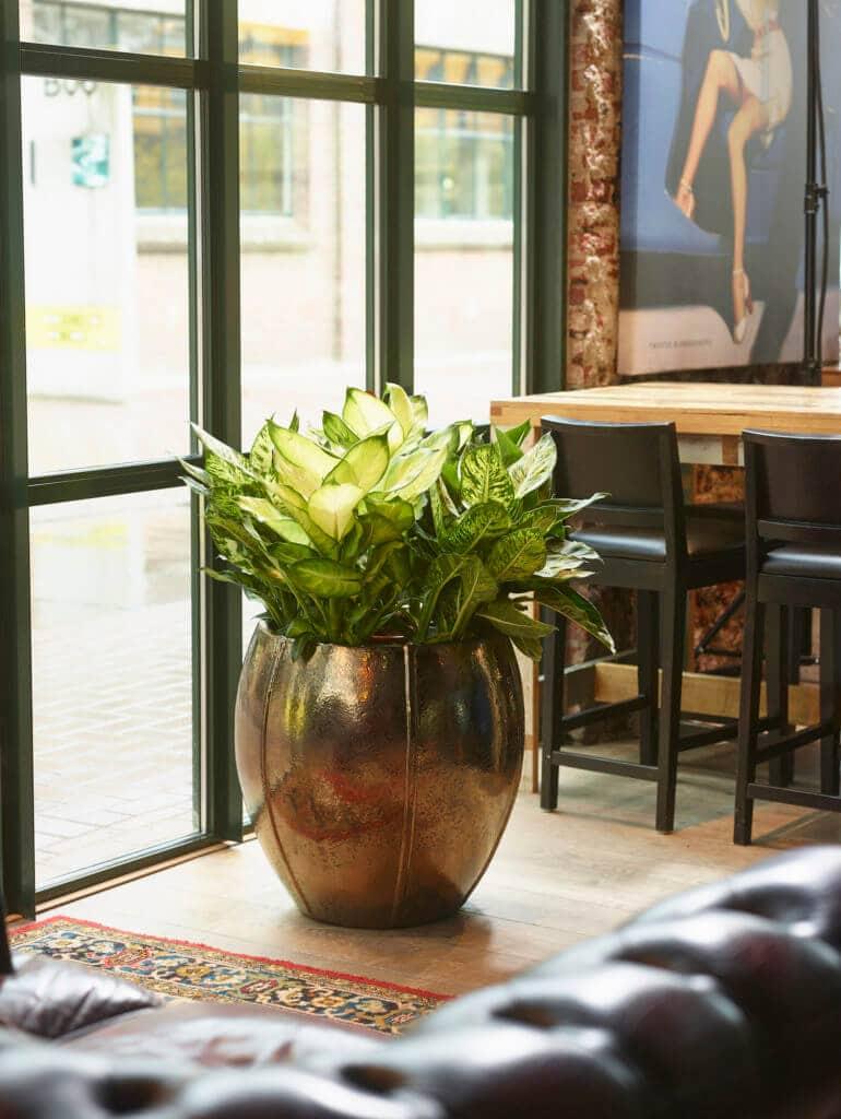 okrasni lonec za rože - cvetlični lonci Bonsai